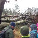 non des arbres déracinés